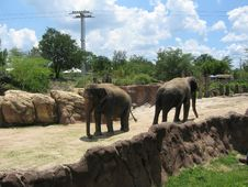 Free Pair Of Elephants Royalty Free Stock Images - 937629