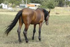 Free Field Horse Royalty Free Stock Image - 937676