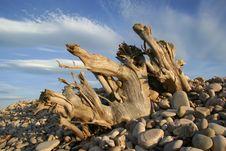 Free Driftwood Skies Stock Photo - 937690