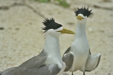 Free Seabird Royalty Free Stock Images - 938539