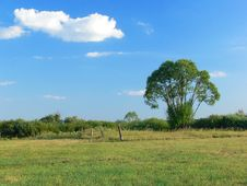Free A Lonely Tree In The Field Stock Images - 939344