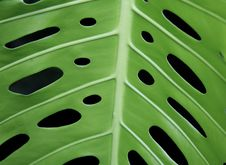 Free Leaf With Symetrical Holes Stock Photos - 939643