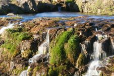 Free Moss And Water Royalty Free Stock Photo - 939695