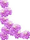 Free Flowers Decorative Stock Photography - 9303762