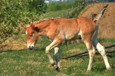 Free Colt At Meadow Royalty Free Stock Image - 9300096