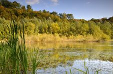 Free Pond In The Forest Royalty Free Stock Photo - 9300305
