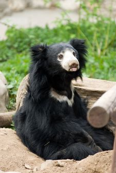 Free A Cute Black Bear Stock Photography - 9300332