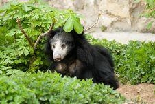 Free Bear Stock Photos - 9300373