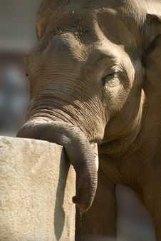Free African Elephant Royalty Free Stock Photography - 9300567
