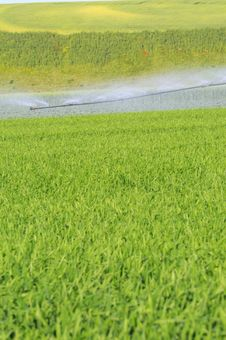 Free Irrigation In Green Backgorund Royalty Free Stock Photo - 9301185
