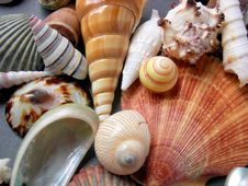 Free Seashells Royalty Free Stock Photography - 9302997