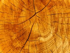 Free Cut Of A Tree An Oak Stock Photography - 9303672