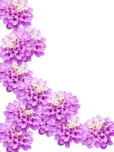 Free Flowers Decorative Stock Photography - 9303762