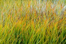 Free Colorful Grass Background Royalty Free Stock Photo - 9304035