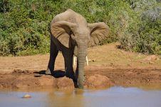 Free Elephant Drink Royalty Free Stock Photo - 9304045