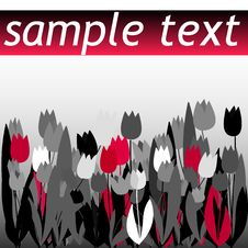 Free Tulip Flyer Stock Images - 9305374