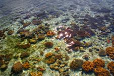 Free Coral Reef Island In Sempurna, Sabah Stock Photography - 9307082