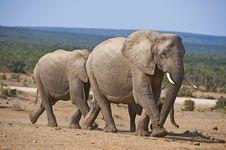 Free Elephant Family Stock Image - 9307171