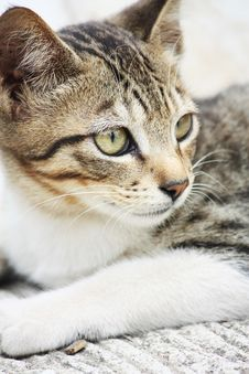 Tramped Cat In The Street Royalty Free Stock Image