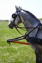 Free Two Horse One Horse Stock Photos - 9313733