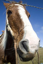 Free Horse Behind Fence Royalty Free Stock Photography - 9315677