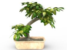 Free Bonsai Tree Royalty Free Stock Photo - 9310675