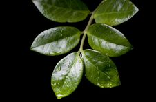 Free Water Drops On  Plant Leaf Stock Photo - 9312620