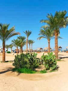 Free Oasis. Place On The Beach In Makadi Bay Royalty Free Stock Photo - 9313435