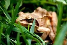 Free Toad Royalty Free Stock Photo - 9314265