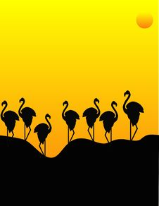 Free Flocking Flamingos Stock Images - 9314314