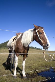 Free Horse Behind Fence Royalty Free Stock Photos - 9315778