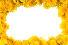 Free Frame Of Yellow Flowers Dandelions Royalty Free Stock Images - 9318139