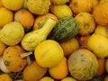 Free Gourds Royalty Free Stock Photos - 9325018