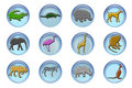 Free Wild Animals Icons Royalty Free Stock Photography - 9329977