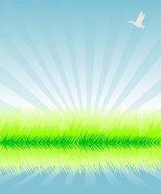 Free Green Grass Royalty Free Stock Photos - 9320128