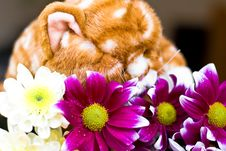 Free Toy And Flowers Stock Image - 9320481