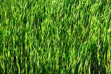 Free Green Grass Stock Photo - 9321280