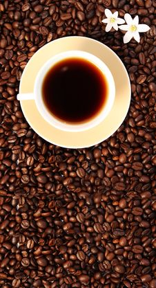 Free Cup Of Coffee Stock Photo - 9323070