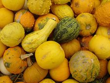 Free Gourds Royalty Free Stock Photos - 9325018