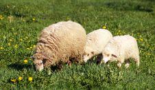 Free Mother & Children Stock Image - 9325281