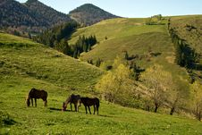 Free Horses Grazing Stock Photos - 9325433