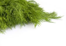 Free Fresh Leaves Of Fennel Stock Images - 9325784