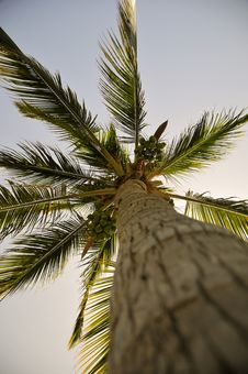 Free Palm Royalty Free Stock Photos - 9327668