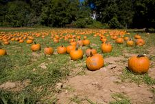 Free Pumpkins Stock Photography - 9327842