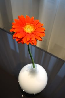 Free Flower In A Vase Stock Image - 9327961