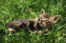 Free Kitten Stock Image - 9328201