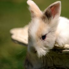 Free Little Rabbit Stock Images - 9328354