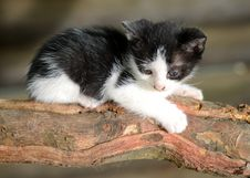Free Kitten Royalty Free Stock Image - 9328366