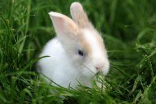 Free Little Rabbit Stock Photography - 9328422