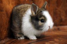 Free Little Rabbit Stock Photo - 9328440